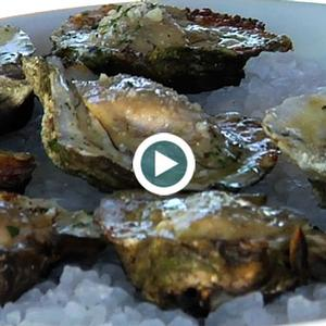 Char-Grilled Gulf Oysters