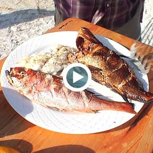 Grilled Gulf Snapper